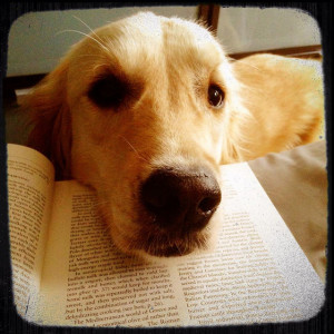 Stop reading and pet me already